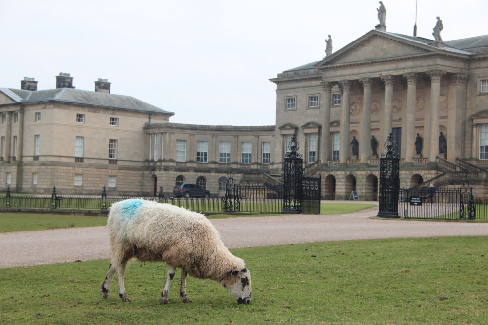 Grazing in front of Kedleston Hall's North Front