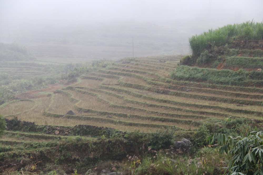 The inhospitable rice paddies